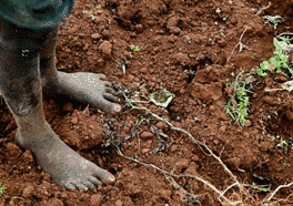 5th December is World Soils Day