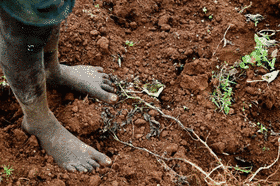 Image courtesy FAO World Soils Day article
